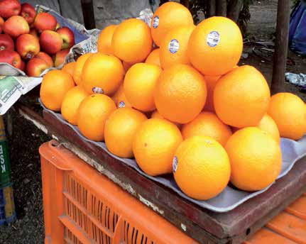 INDIA TENDENCIA ACTUAL EN EL MERCADO DE IMPORTACIÓN por Renuka Kholkute, Fruit World India, Maharashtra FRUIT IMPORT TRENDS IN INDIA by Renuka Kholkute, Fruit World India, Pune, Maharashtra India is