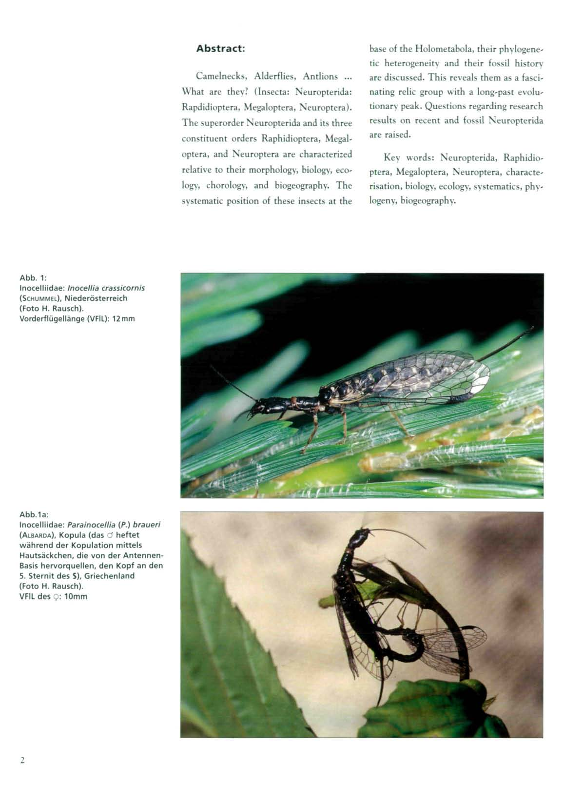 Abstract: Cameinecks, Alderflies, Antlions... What are they? (Insecta: Neuropterida: Rapdidioptera, Megaloptera, Neuroptera).