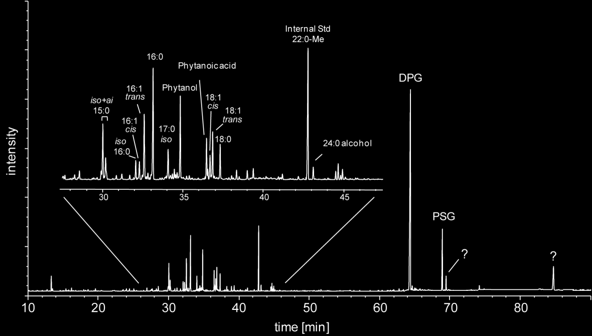 Intact polar lipids in Lake Tyrrell Figure 6.1: GC-FID chromatogram of lipids derived from alkaline hydrolysis of planktonic microorganisms in Lake Tyrrell.