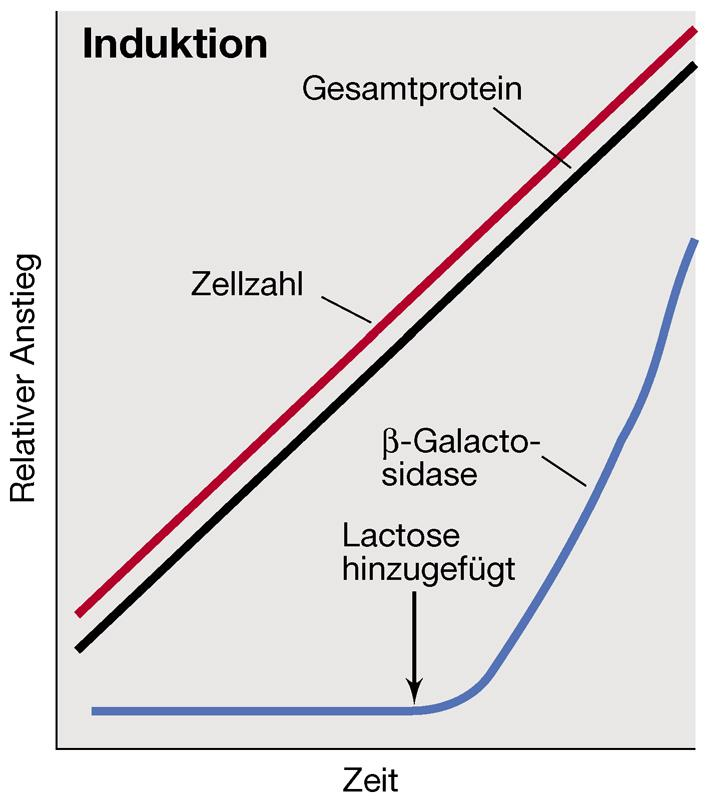 enzyme induction and repression pdf