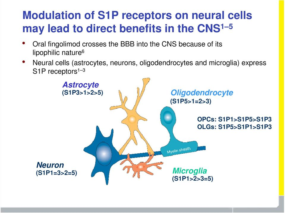 (astrocytes, neurons, oligodendrocytes and microglia) express S1P receptors 1 3 Astrocyte