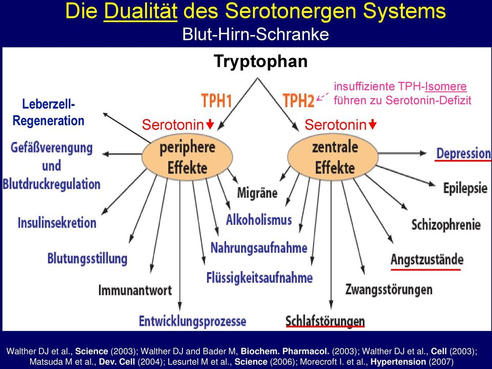 , Science (2003); Walther DJ and Bader M, Biochem. Pharmacol. (2003); Walther DJ et al.