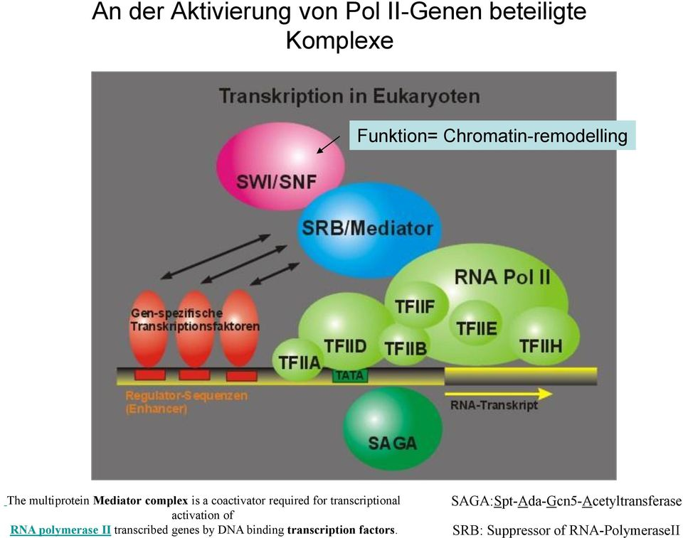 for transcriptional activation of RNA polymerase II transcribed genes by DNA