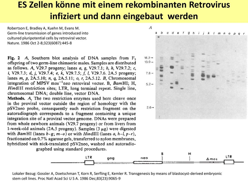 Germ-line transmission of genes introduced into cultured pluripotential cells by retroviral vector. Nature.