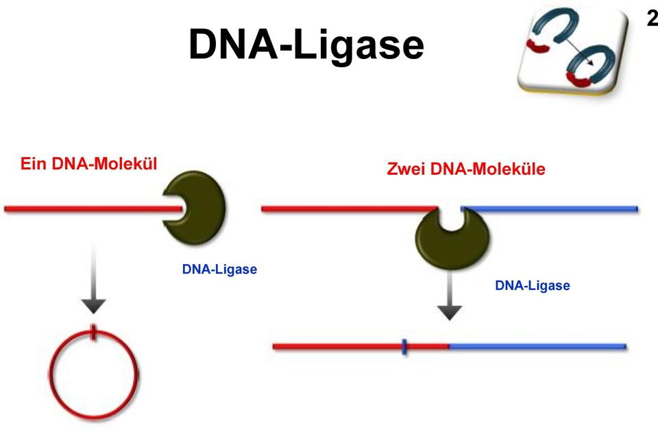 DNA-Moleküle