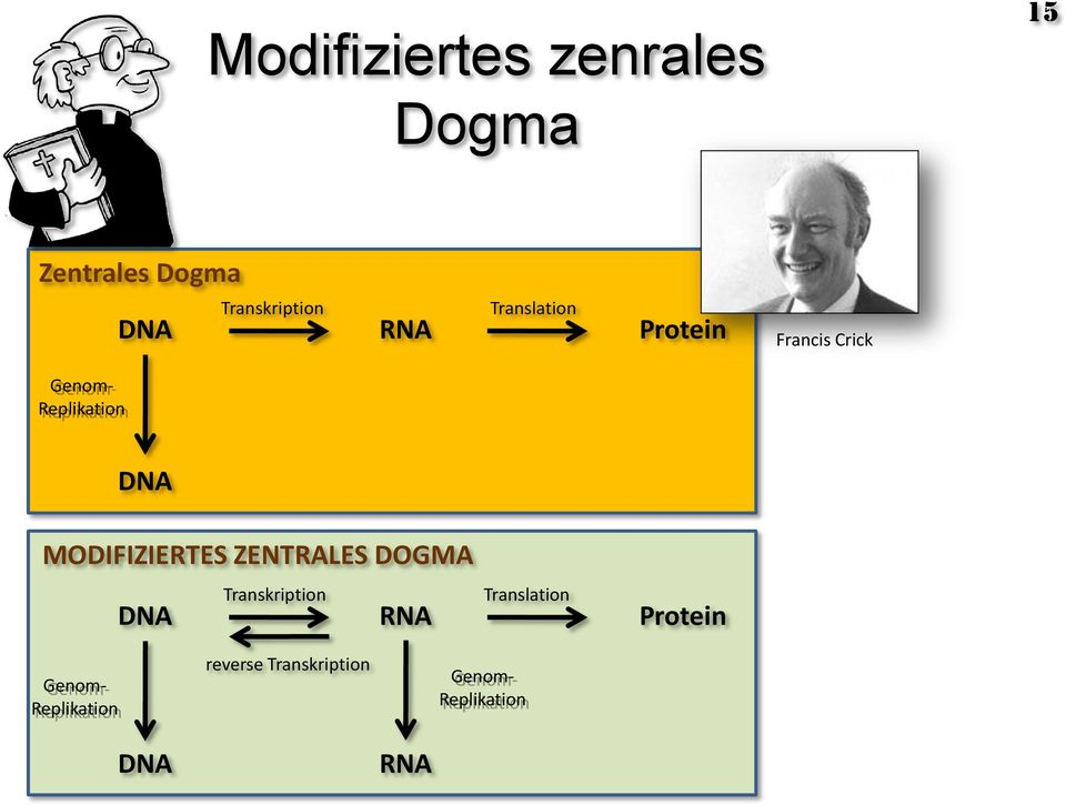 MODIFIZIERTES ZENTRALES DOGMA Transkription Translation DNA RNA