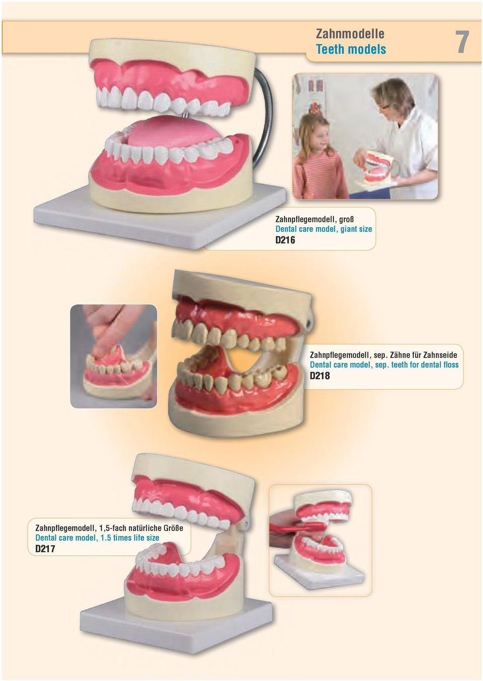 Zähne für Zahnseide Dental care model, sep.