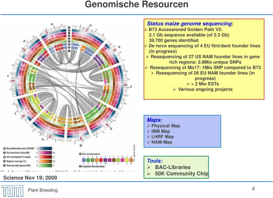 700 genes identified De novo sequencing of 4 EU flint/dent founder lines (in progress) Resequencing of 27 US NAM founder lines in gene rich regions: