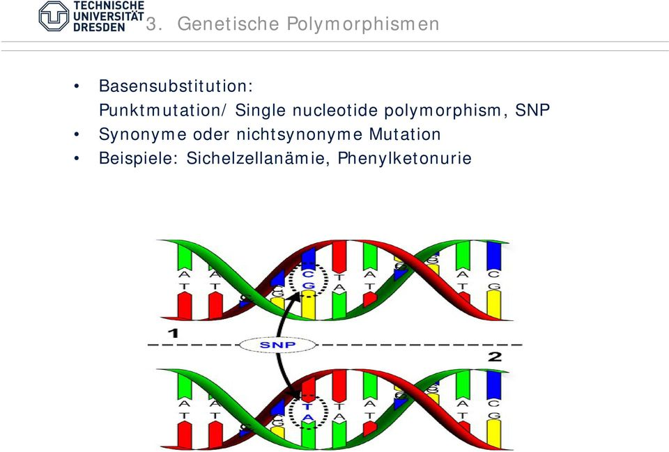 nucleotide polymorphism, SNP Synonyme oder