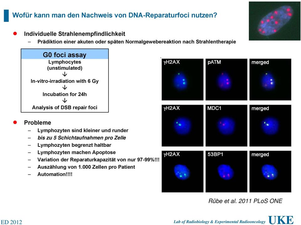 Lymphocytes (unstimulated) In-vitro-irradiation with 6 Gy Incubation for 24h Analysis of DSB repair foci Probleme Lymphozyten sind kleiner