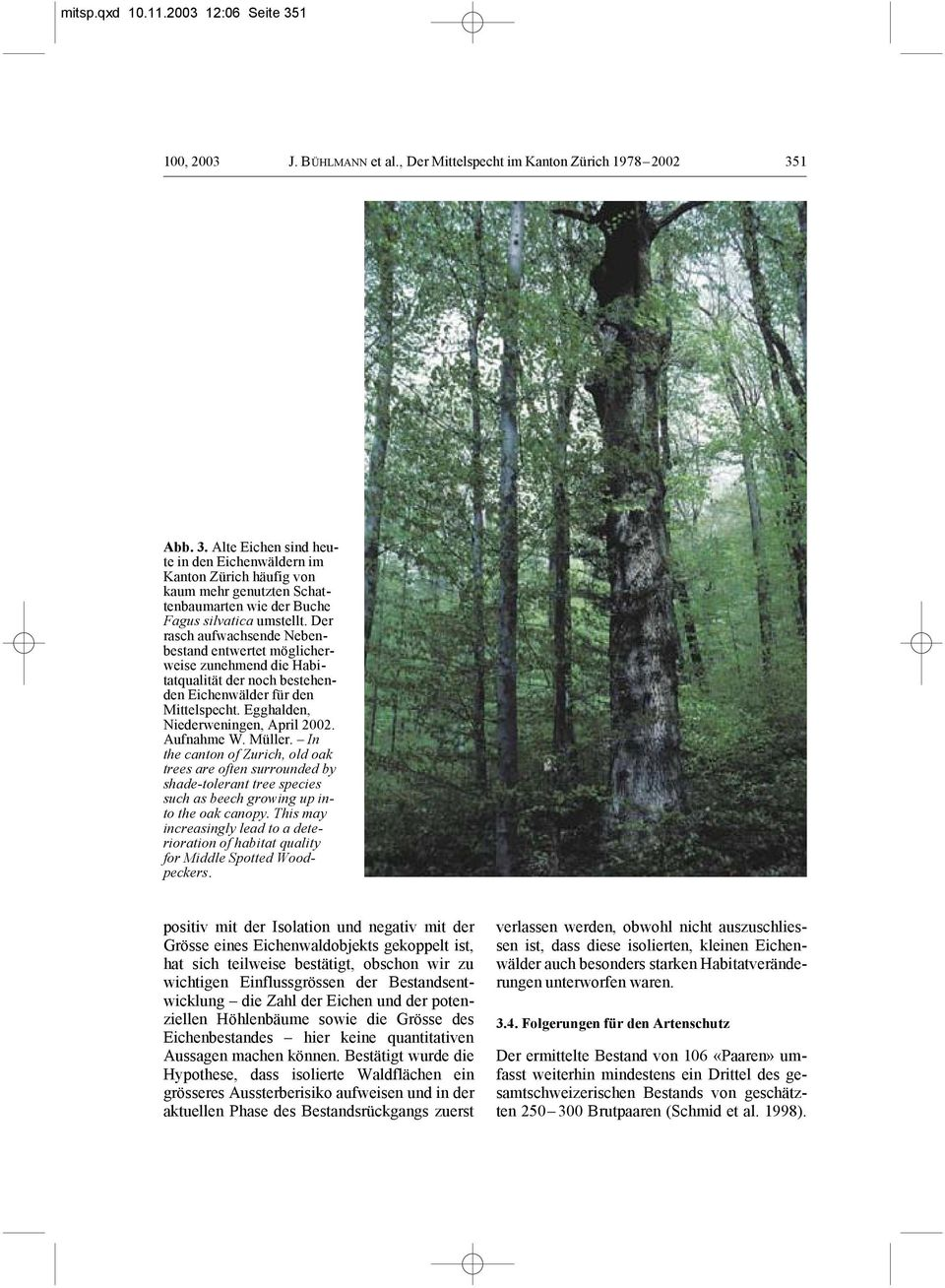 Müller. In the canton of Zurich, old oak trees are often surrounded by shade-tolerant tree species such as beech growing up into the oak canopy.
