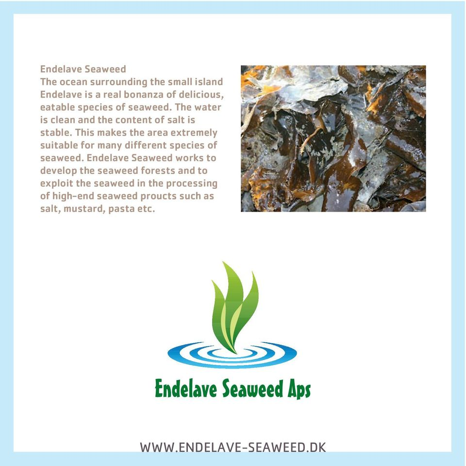 This makes the area extremely suitable for many different species of seaweed.