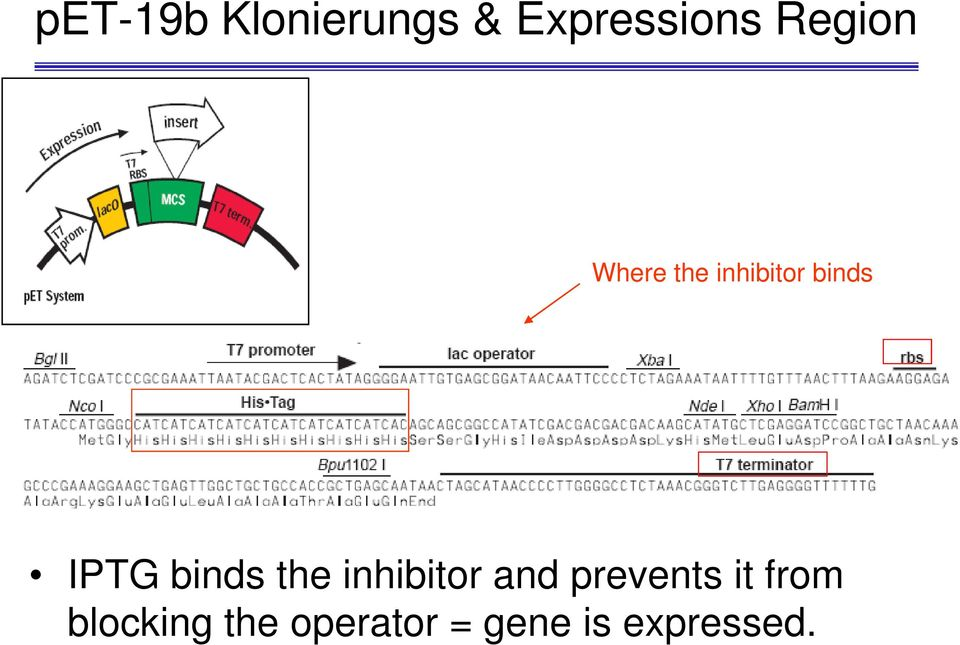 binds the inhibitor and prevents it