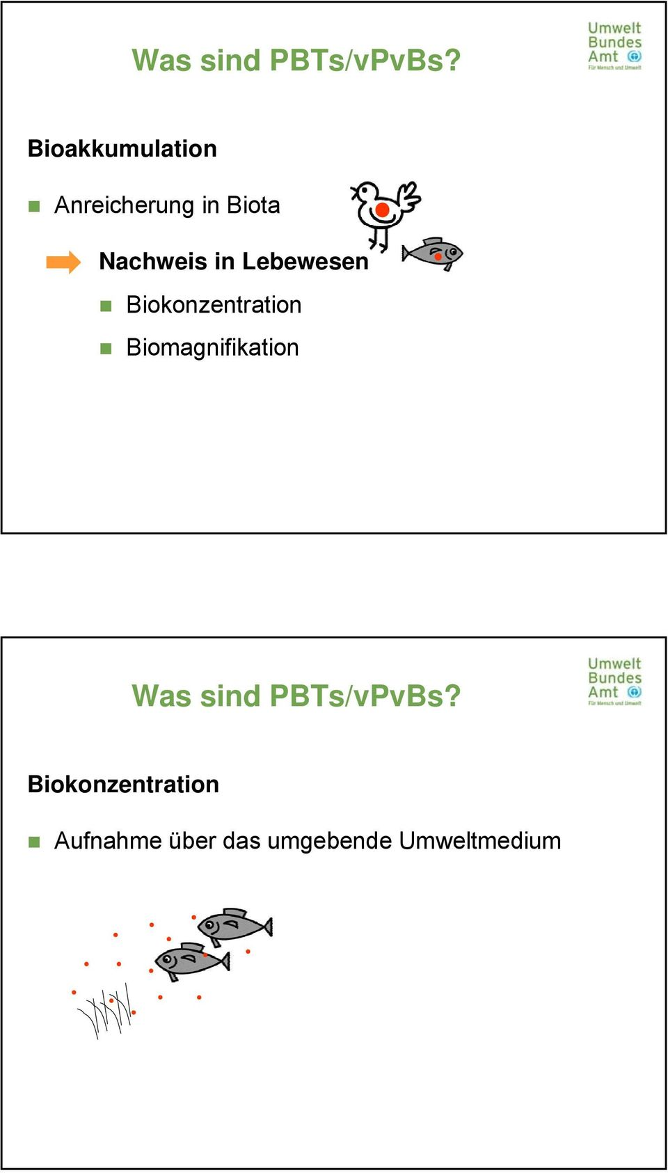 in Lebewesen Biokonzentration Biomagnifikation