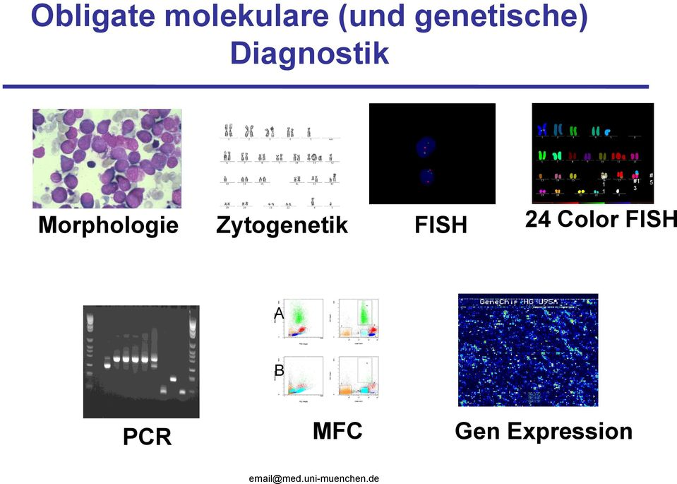 Zytogenetik FISH 24 Color FISH A B PCR
