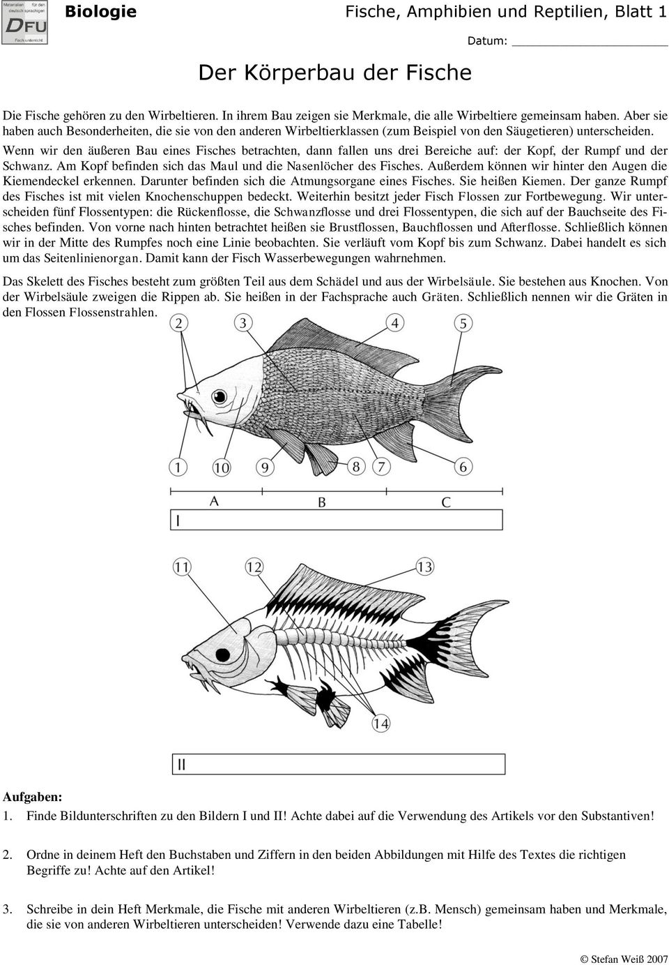 biologie wirbeltiere 1 fische amphibien und reptilien stefan wei themenheft pdf. Black Bedroom Furniture Sets. Home Design Ideas