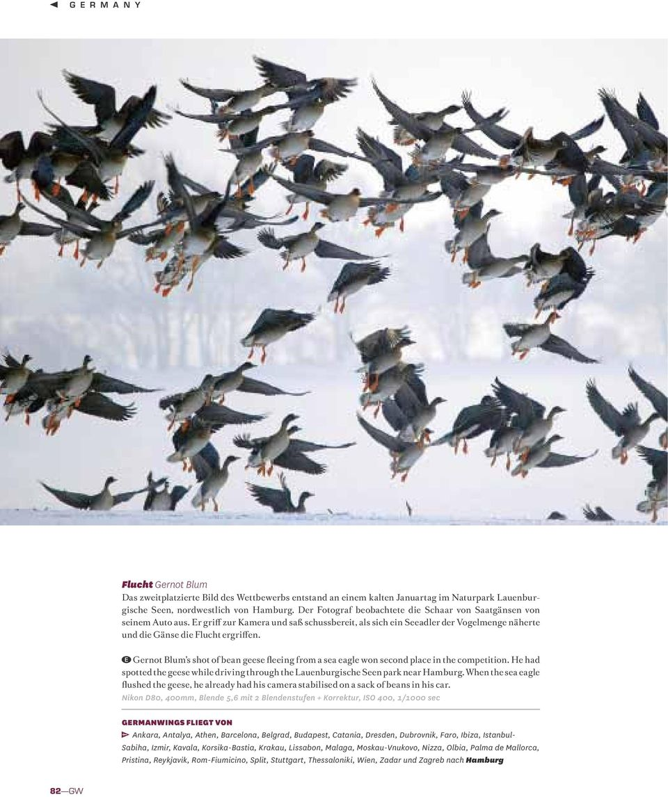 Gernot Blum s shot of bean geese fleeing from a sea eagle won second place in the competition. He had spotted the geese while driving through the Lauenburgische Seen park near Hamburg.