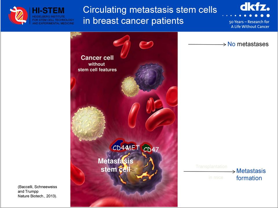 cell without stem cell features (Baccelli, Schneeweiss and Trumpp Nature Biotech.