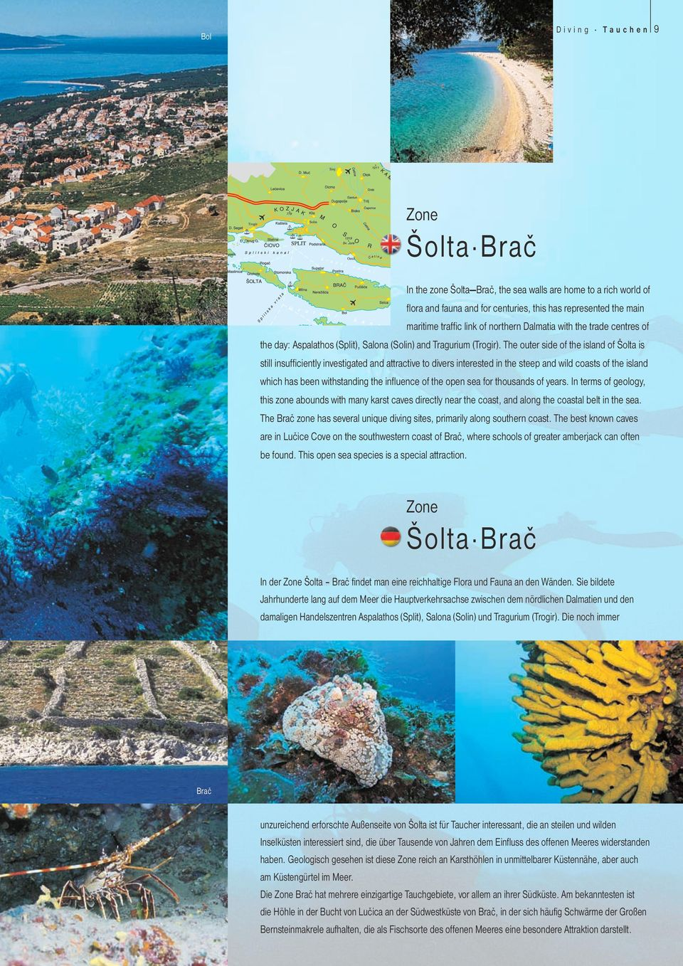 The outer side of the island of Šolta is still insufficiently investigated and attractive to divers interested in the steep and wild coasts of the island which has been withstanding the influence of