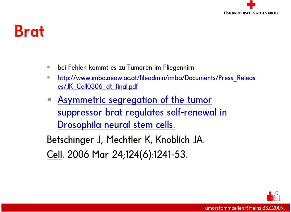 pdf Asymmetric segregation of the tumor suppressor brat regulates self-renewal in