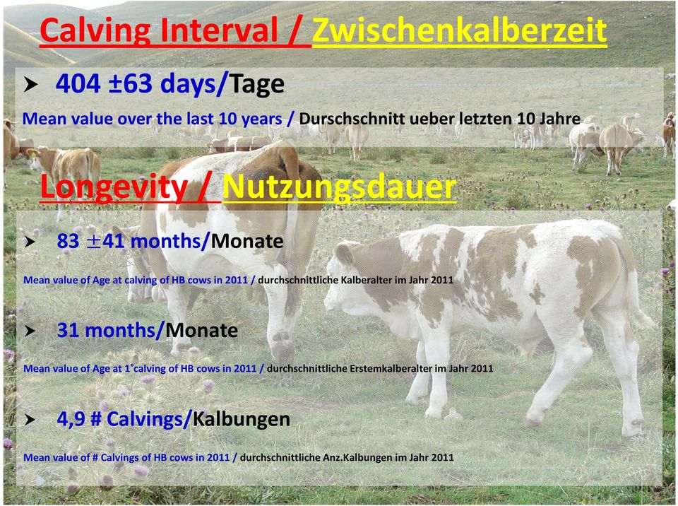 Jahr 2011 31 months/monate Mean value of Age at 1 calving of HB cows in 2011 / durchschnittliche Erstemkalberalter im
