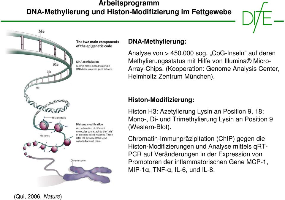 Histon-Modifizierung: Histon H3: Azetylierung Lysin an Position 9, 18; Mono-, Di- und Trimethylierung Lysin an Position 9 (Western-Blot).