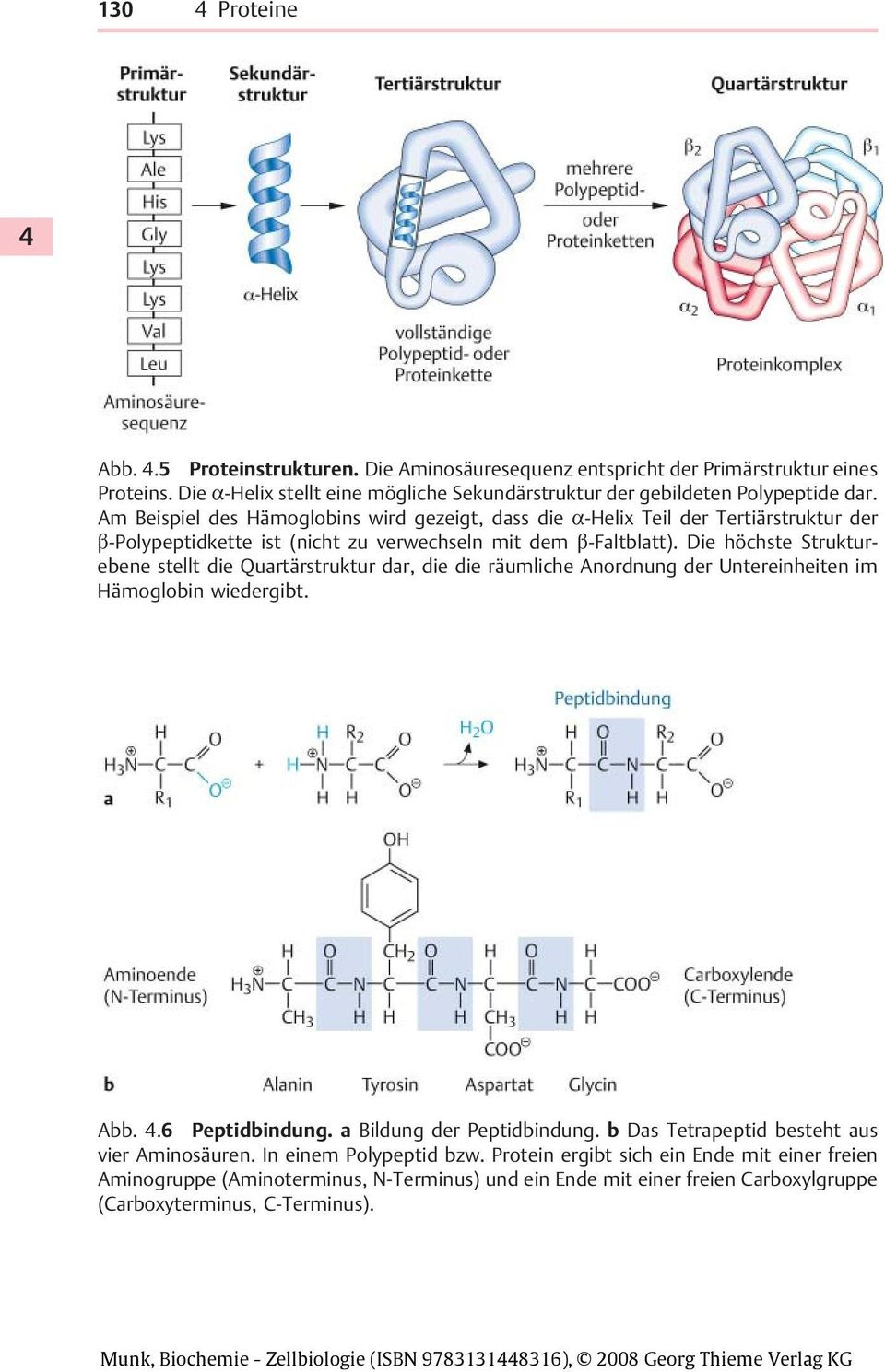 Perfect 132 Ribosomen Und Protein Synthese Arbeitsblatt Photos ...