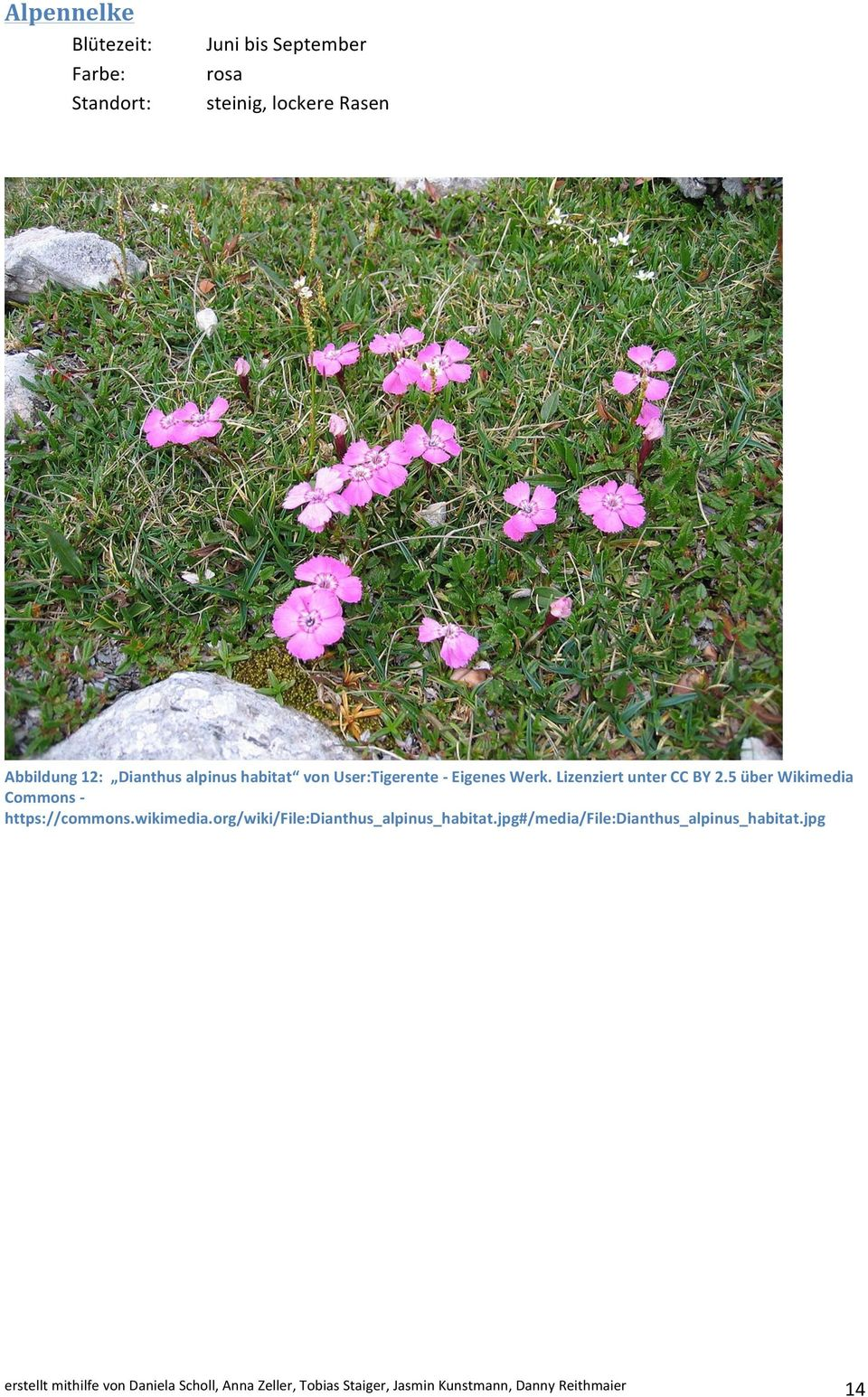 5 über Wikimedia Commons - https://commons.wikimedia.org/wiki/file:dianthus_alpinus_habitat.