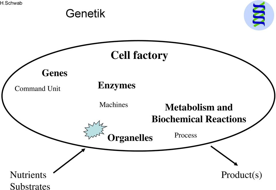 Biochemical Reactions Organelles