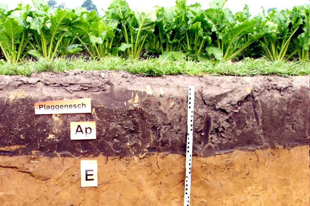Soil moisture and climate change Prof. Dr.