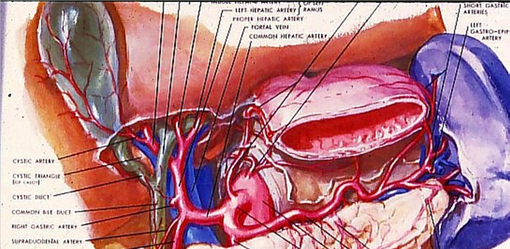 Arterial Supply to