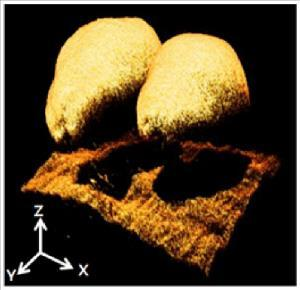 Chapter 2: Part I: 3-D imaging systems for agricultural applications A review 26 Figure 2-7: 3-D reconstruction of melon seeds based on interferometry (reproduced from Lee et al. (2011)).