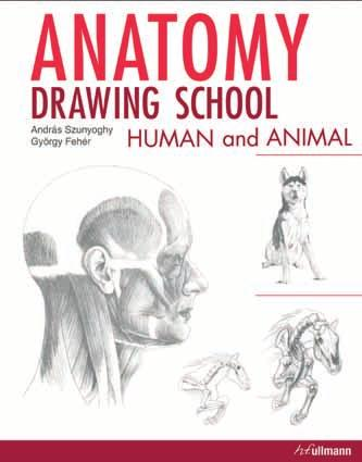 Hful mann publishing gmbh head of international sales backoffice anatomy drawing school two volumes at the price of one fandeluxe Choice Image